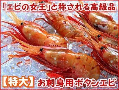 お刺身ぼたんえび(特大・500g)