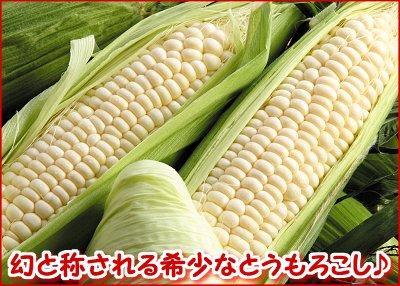 朝採りとうもろこしセット(黄5本・白5本)