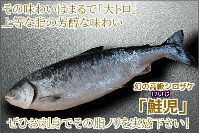 鮭児(けいじ)<br> 1本・約2~2.2kg