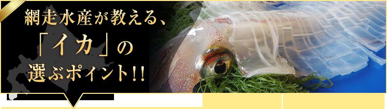 「イカ」の選ぶポイント!!