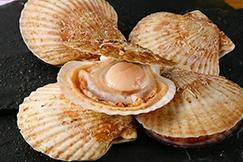 美味しいほたて貝の選び方