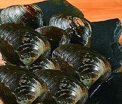 美味しいほっき貝の選び方