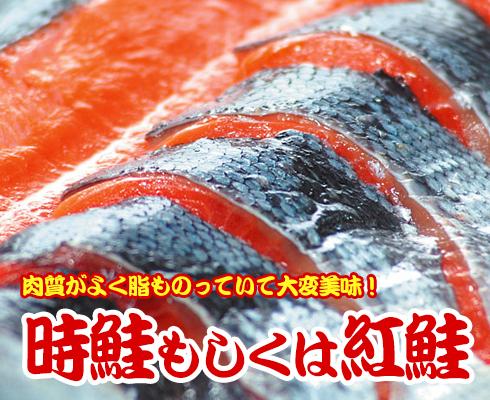 時鮭もしくは紅鮭