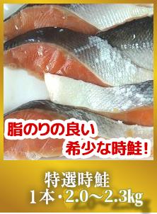 特選時鮭1本・1.1〜1.3kg