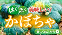 北海道のかぼちゃ