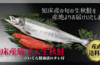 お待たせしました!今しか手に入らない「知床産筋子入り生秋鮭(生冷凍)」販売開始です